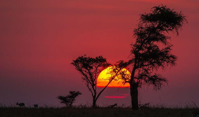"""""""Die Serengeti erwacht"""""""
