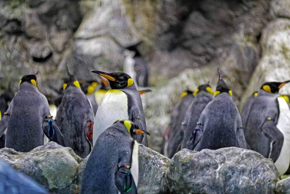 ... Die Sicht des Pinguins ...