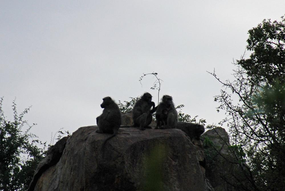 Die Siluetten der drei weisen Affen im letzten Abendlicht
