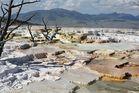Die Sinterterassen von Mammoth Hot Springs...