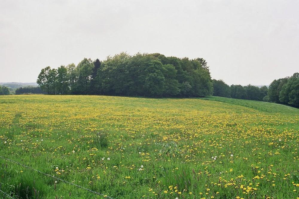 Die Solinger Felder 2