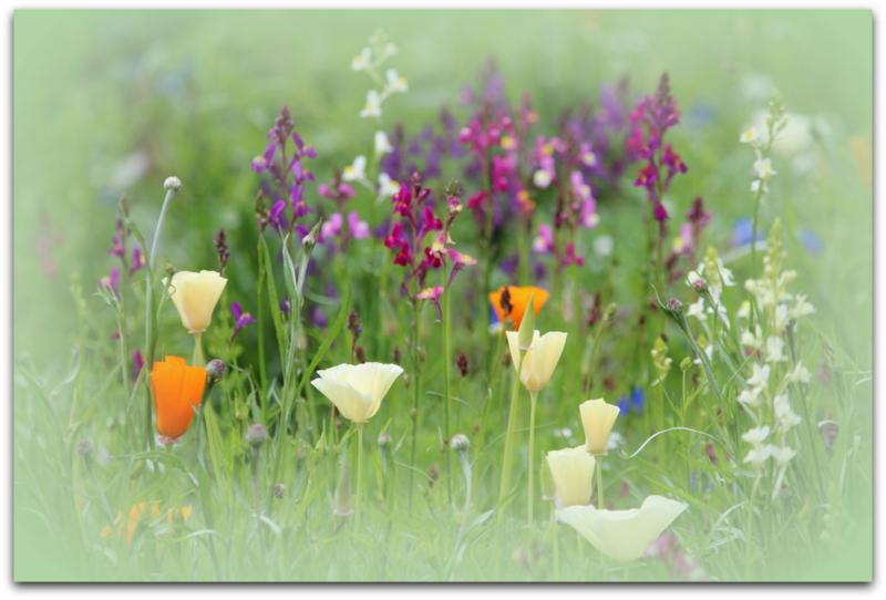 Die Sommerwiese mit ihren Schönheiten