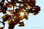 Die Sonne blinzelt durch den Herbst