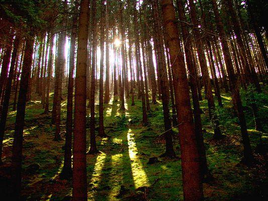 Die Sonne blinzelt durch die Bäume...