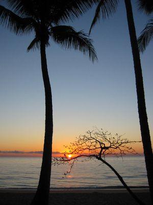 Die Sonne geht auf in Palm Cove