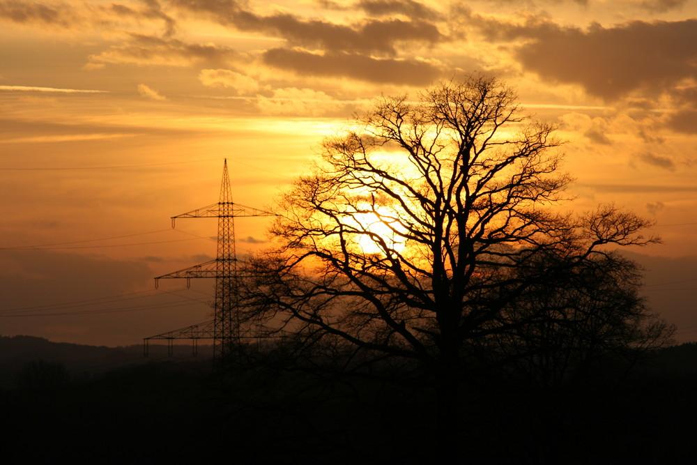 Die Sonne geht, der Baum bleibt.