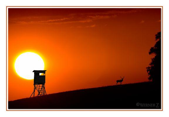 Die Sonne geht, der Hirsch kommt