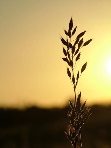 Die Sonne geht unter! Teil II