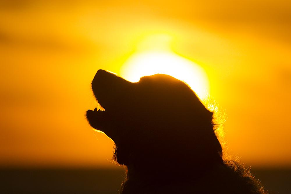 Die Sonne genießen