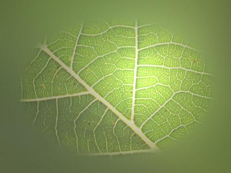 Die Sonne hat auf dieses Blatt den grünen Gruß geschrieben