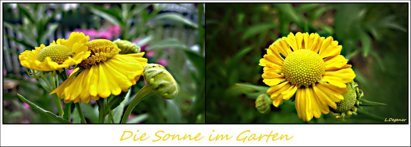 Die Sonne im Garten