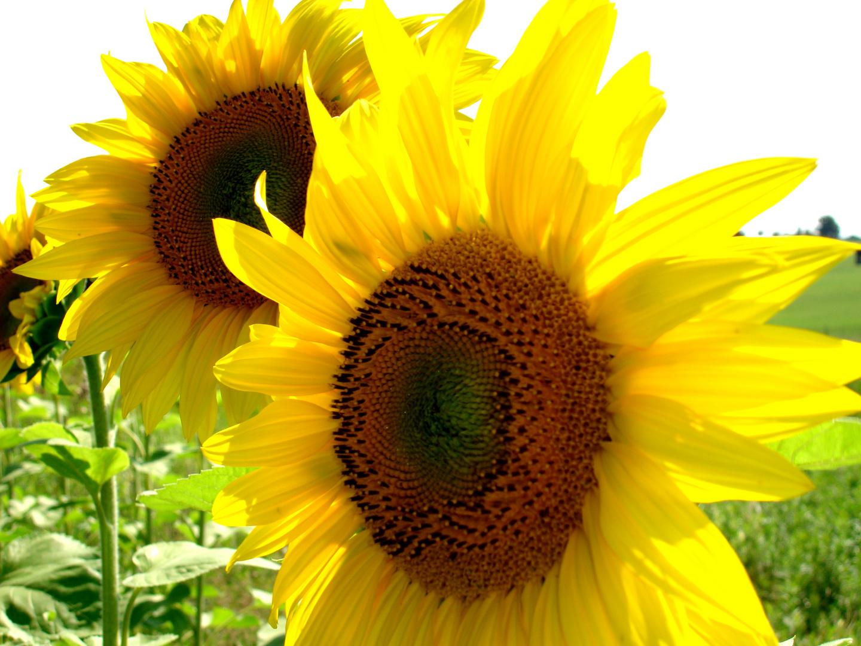 Die Sonne ist die Universalarznei aus der Himmelsapotheke!