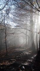 Die Sonne kämpft sich durch den Nebel