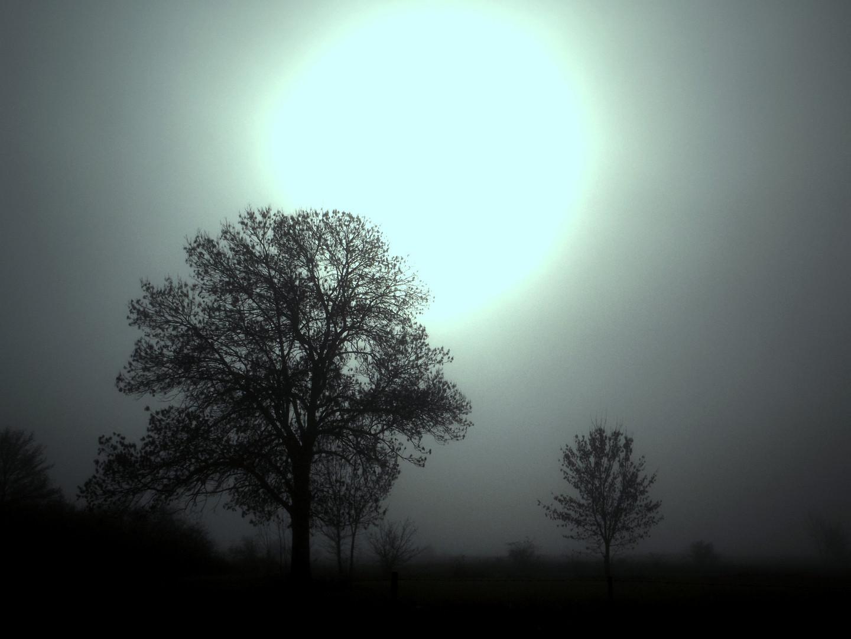 Die Sonne kommt aus dem Nebel....