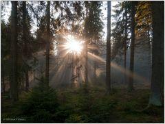 Die Sonne kommt durch