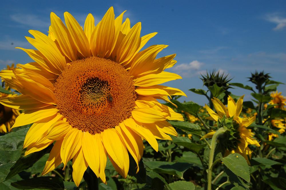 Die Sonne lacht.....