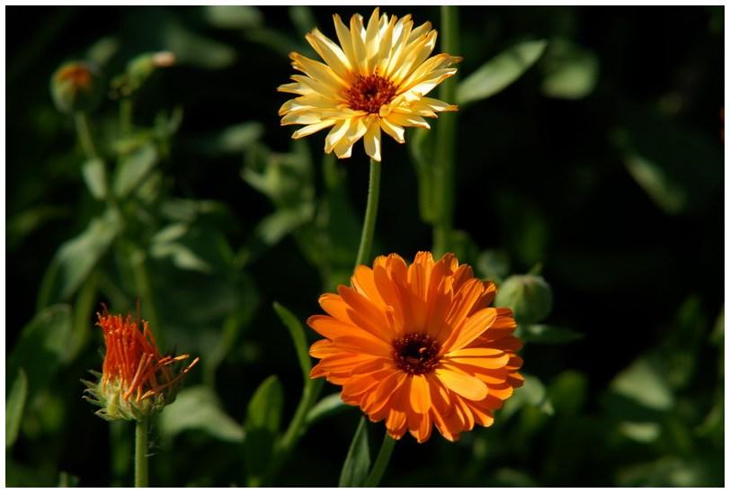 Die Sonne macht Blumen