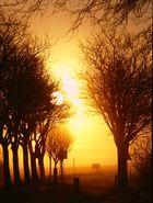 Die Sonne steigt aus dem Nebel
