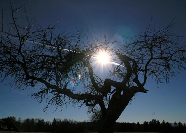 Die Sonne Über Dem Baum