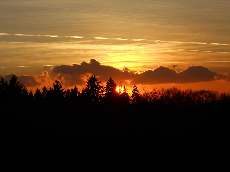 Die Sonne über den Tannen