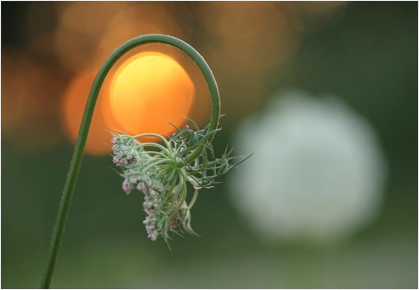 Die Sonne umkreisen ...