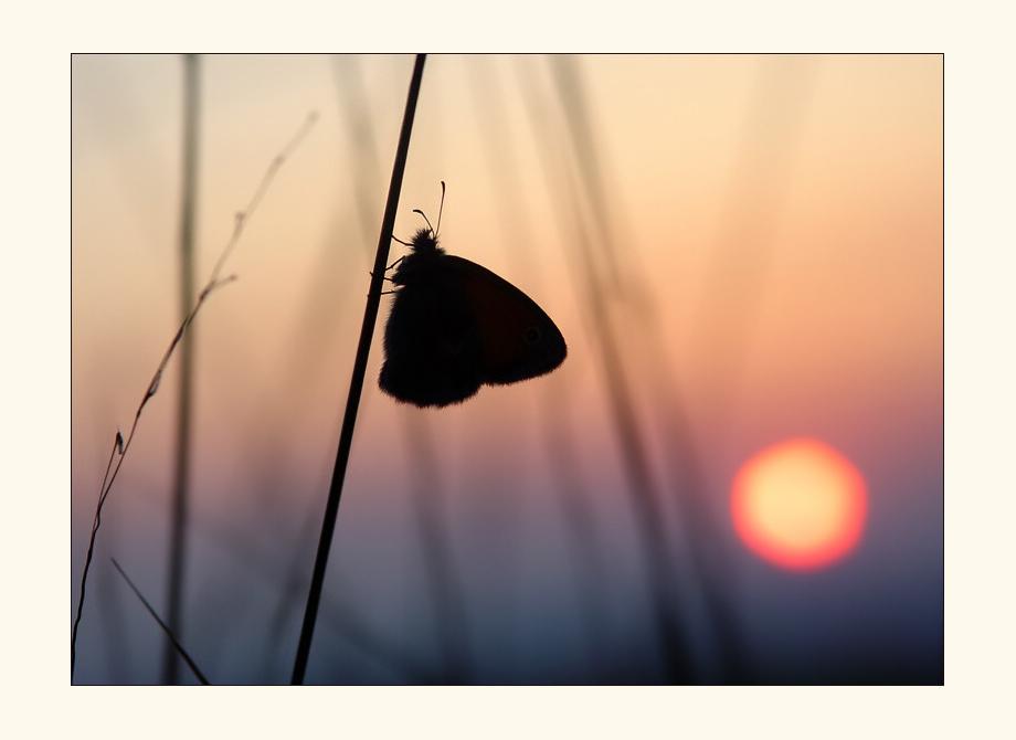 ...die Sonne und der Schmetterling...