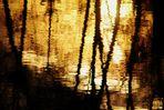 die Sonne versinkt im Neckar wie flüssiges Gold und die Zweige spiegeln sich darin
