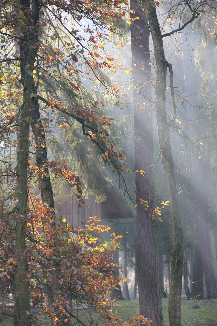 Die Sonne vertreibt den Nebel im Wald