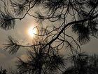 Die Sonne will durch den Nebel brechen.