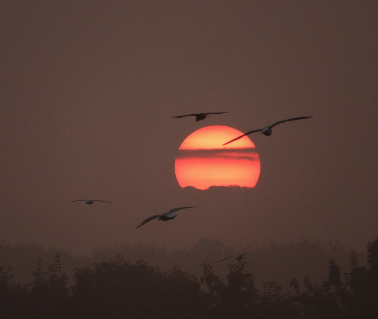 Die Sonnenaufgänge waren diese Woche eine besondere Klasse