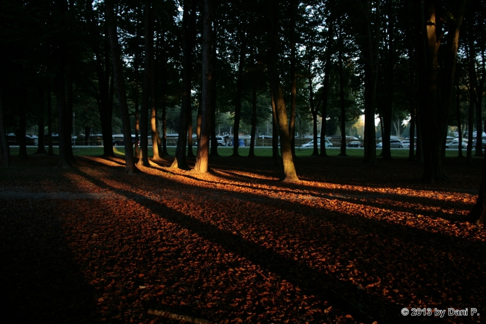 Die Sonnenstrahlen erreichen den Wald