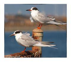 Die Sonntagsvögel...