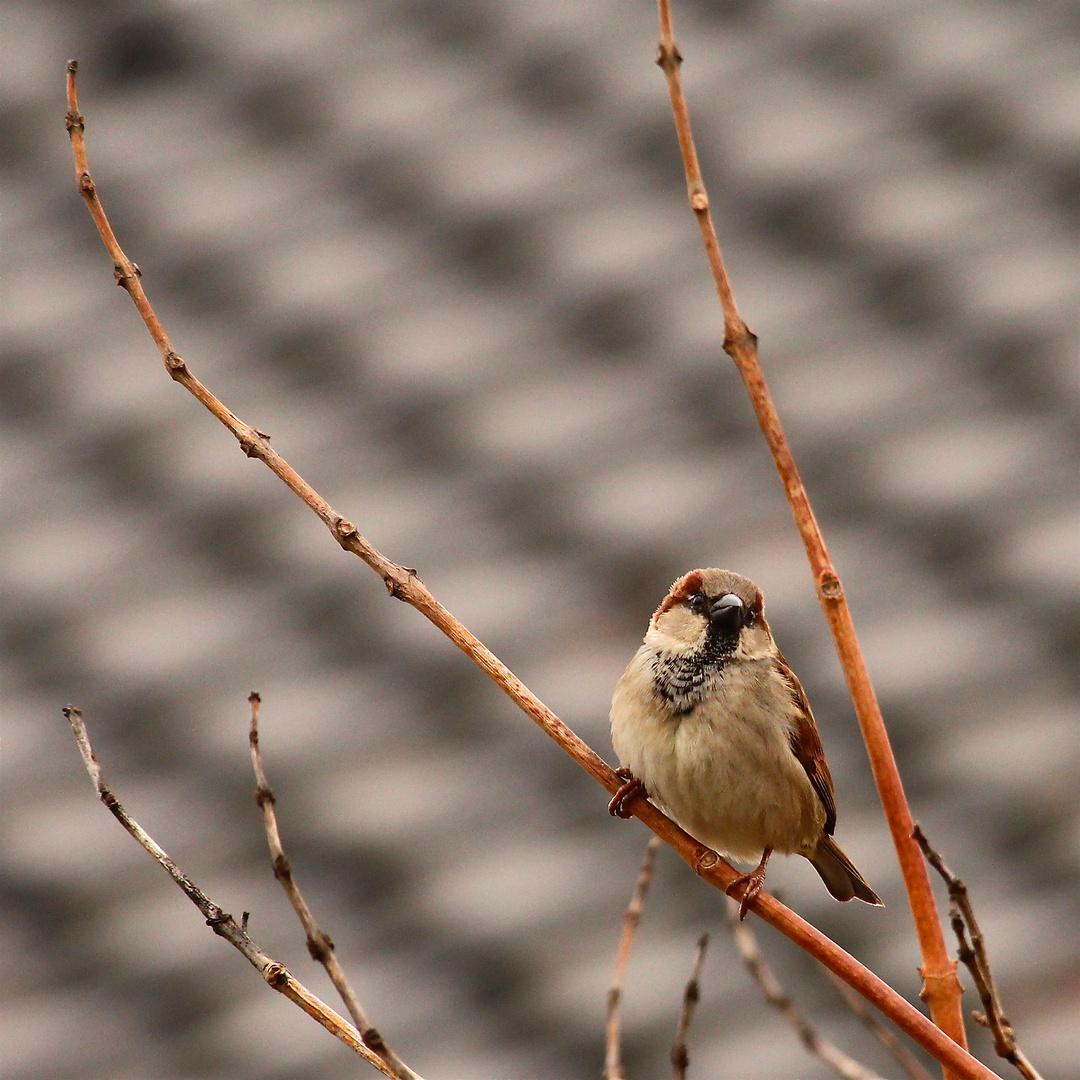 Die Spatzen pfeifen es von den Dächern - irgendwo muß er doch sein - der Frühling . . .