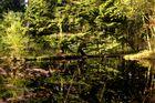 Die Spiegelung im Teich
