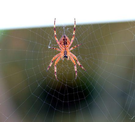 Die Spinne am Fenster