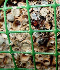 Die Spinne an ihrer Beute