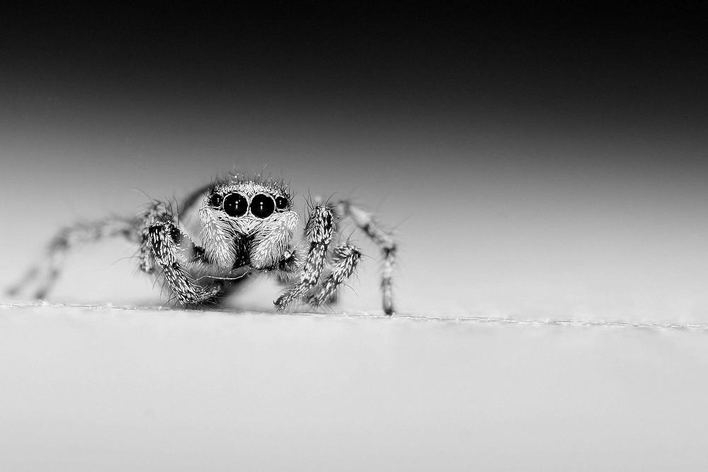 Die Spinne auf der Fensterbank 2