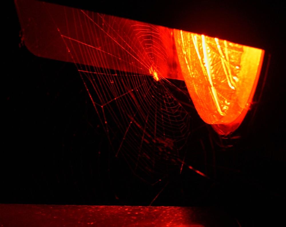 Die Spinne auf der Sonnenbank
