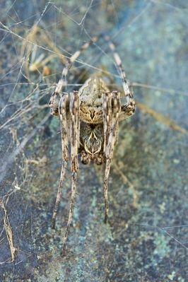 Die Spinne auf der Statue