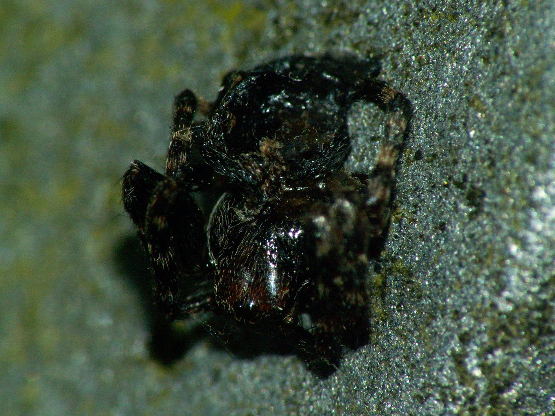 Die Spinne, hätte ich fast übersehen !