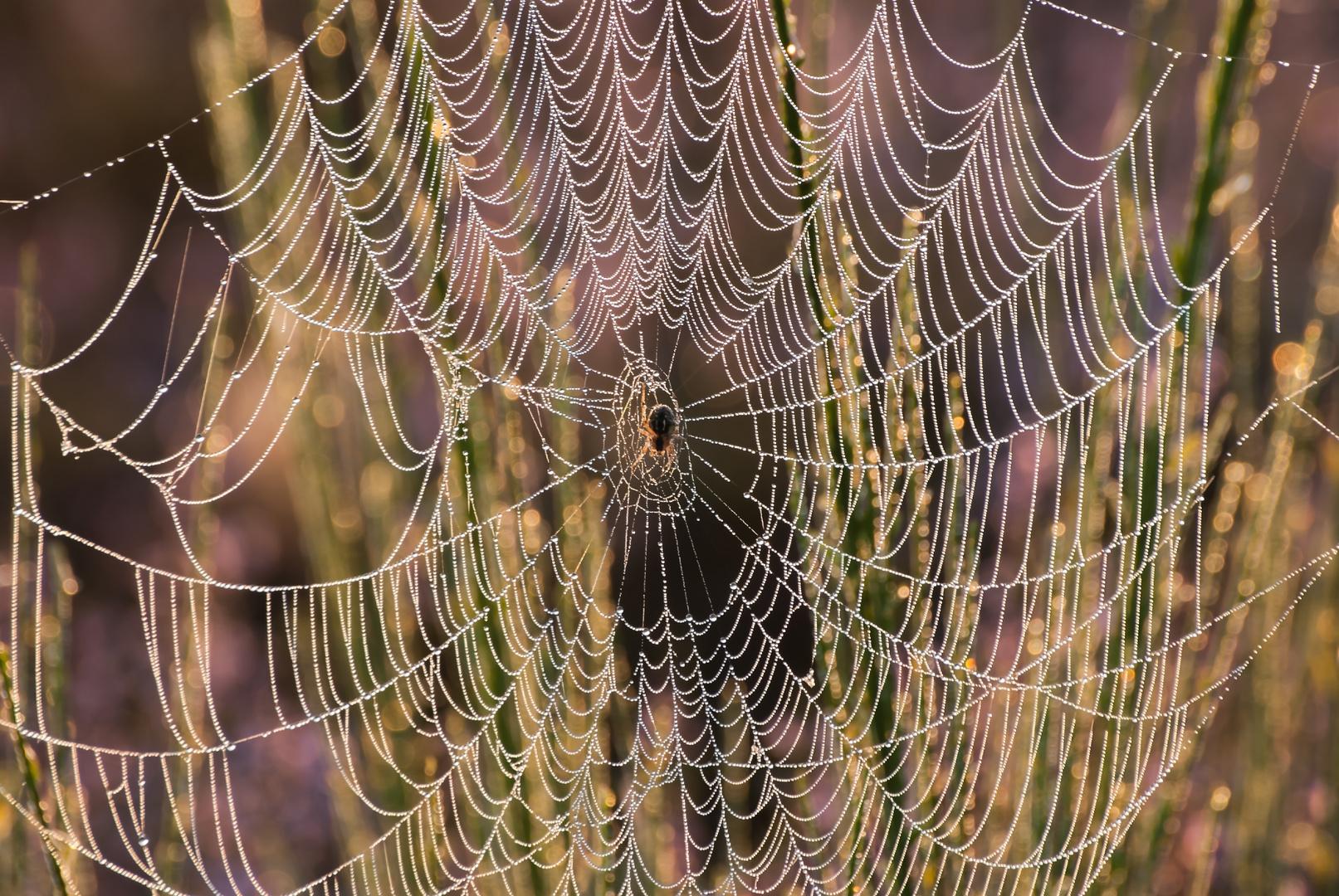 """""""Die Spinne im Netz"""""""