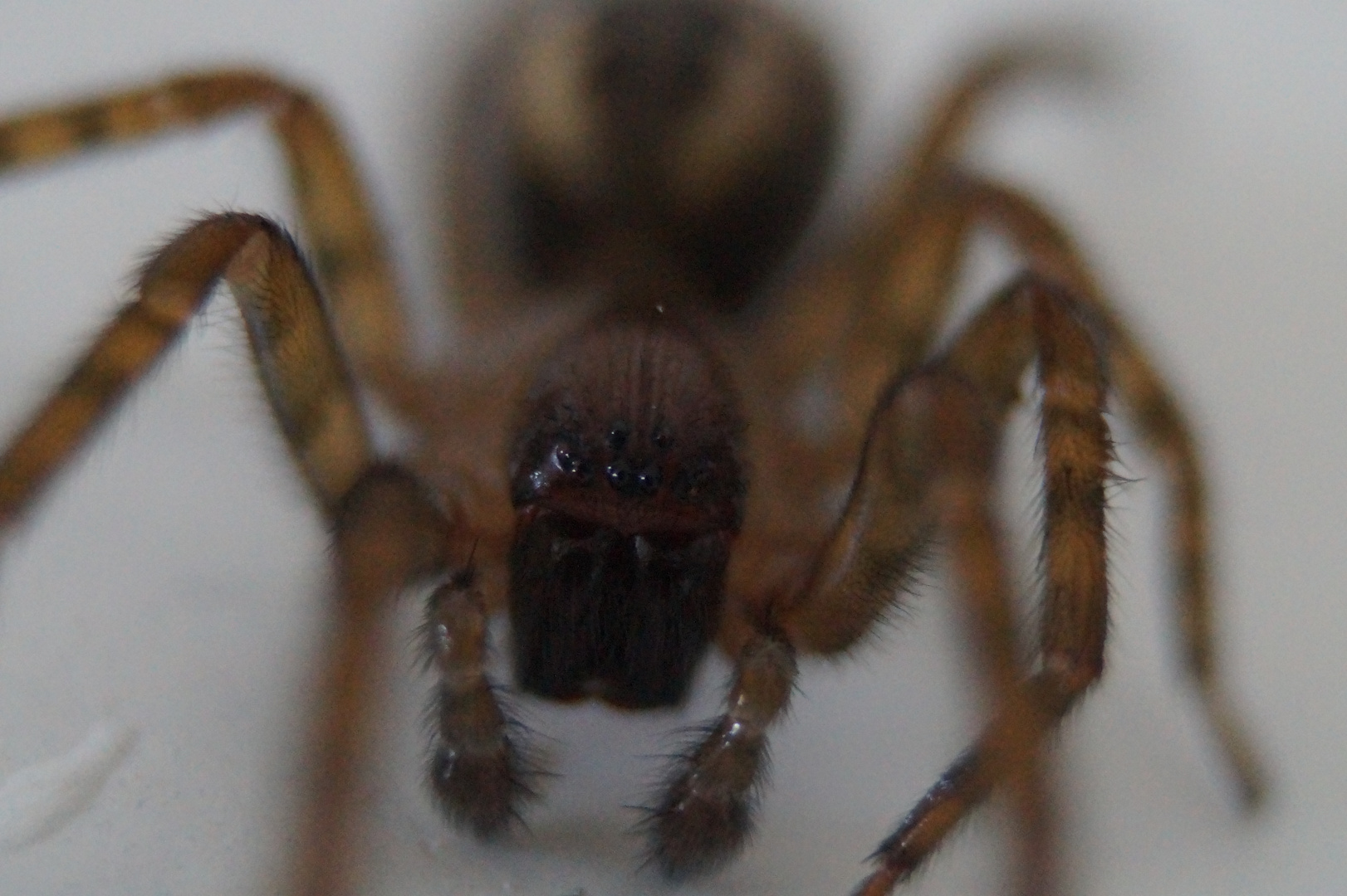 Die Spinne in der Badewanne . . .