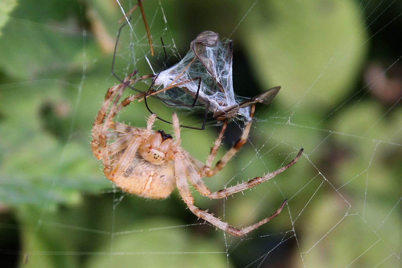Die Spinne und ihr Vorrat