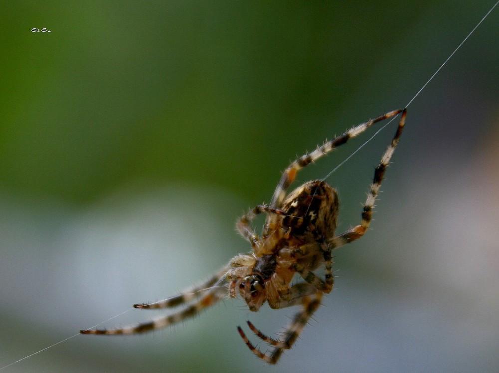 Die spinnen....