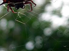 die spinnen 2
