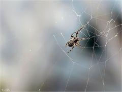 Die Spinnen ..