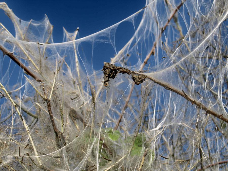 Die Spinnen.... [ohne Zoom]