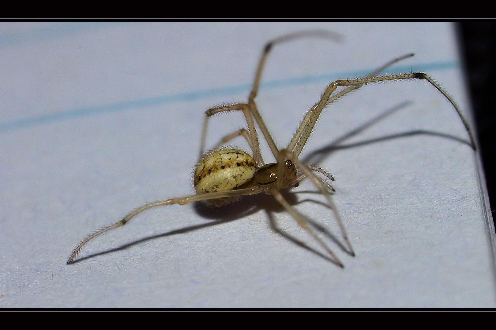 ..die Spinnerin....wünscht schönes Wochenende...