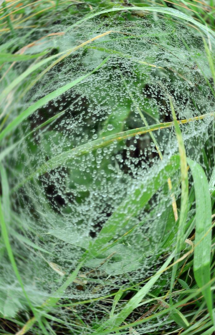 Die Spinnwebe