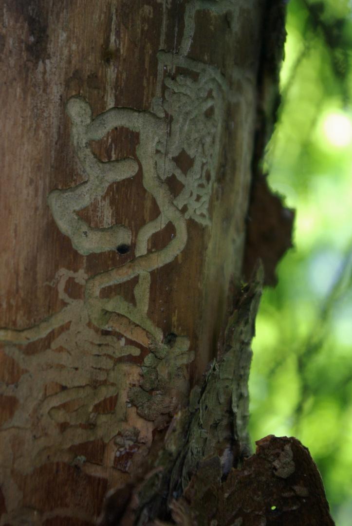 Die Spuren der Tiere